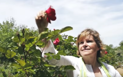 Ervas Finas, uma viagem pelo jardim dos sabores
