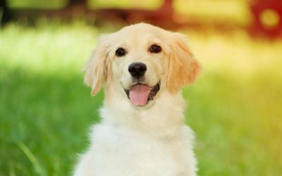 Meganimal, uma história feliz sobre animais de companhia